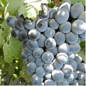 Yribarren Wine